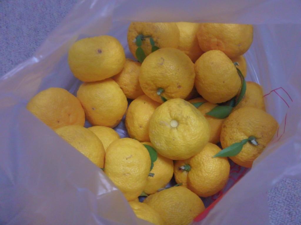 [Blog] 柚子胡椒
