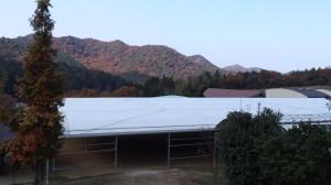 [Blog] 紅葉も終わり季節は冬❅